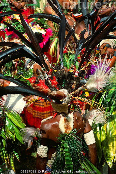 Tribal head-dresses of the Gor people, Kundiawa, Papua New Guinea  ,  ASIA,COLOURFUL,CULTURES,FEATHERS,FESTIVALS,ORNATE,PAPUA NEW GUINEA,PEOPLE,SOUTH EAST ASIA,TRIBAL,TRIBES,VERTICAL,WEST-AFRICA  ,  Patricio Robles Gil