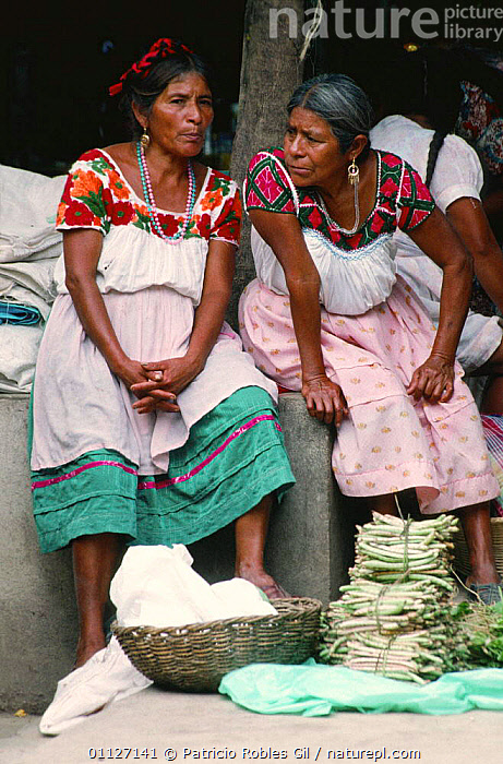 Women selling produce at Nahuatl Indian market, Huejutla, Mexico  ,  CENTRAL AMERICA,CULTURES,MARKETS,MEXICO,PEOPLE,TRADE,TRADITIONAL,VEGETABLES,VERTICAL,CENTRAL-AMERICA  ,  Patricio Robles Gil