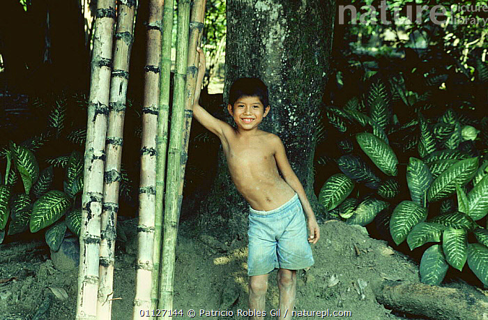 Indian boy beside bamboo canes, Veracruz, Mexico  ,  CENTRAL AMERICA,CHILDREN,FORESTS,JUVENILE,MEXICO,PEOPLE,TROPICAL,YOUNG,CENTRAL-AMERICA  ,  Patricio Robles Gil