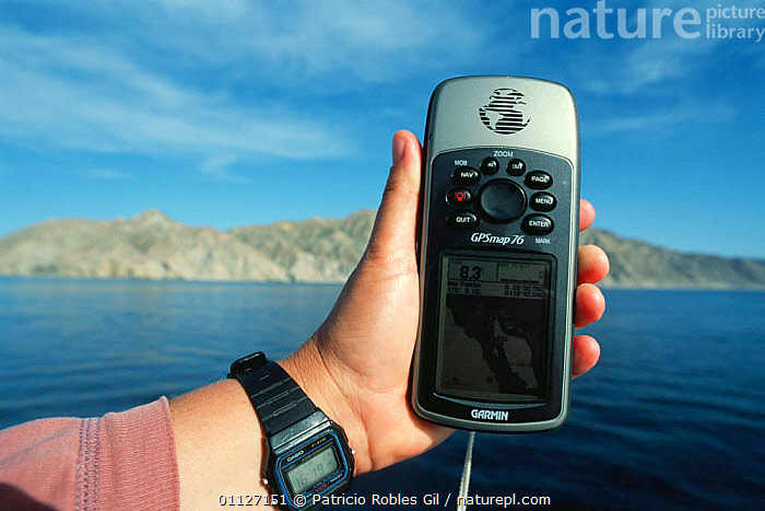 Man holding GPS monitor for recording position of whales, Gulf of California, Mexico  ,  CENTRAL AMERICA,CETACEANS,COASTAL WATERS,COASTS,EQUIPMENT,LOCATION,MAMMALS,MAN,MARINE,MEXICO,PEOPLE,PRIMATES,RESEARCH,SCIENTIFIC,VERTEBRATES,WHALES,CENTRAL-AMERICA  ,  Patricio Robles Gil