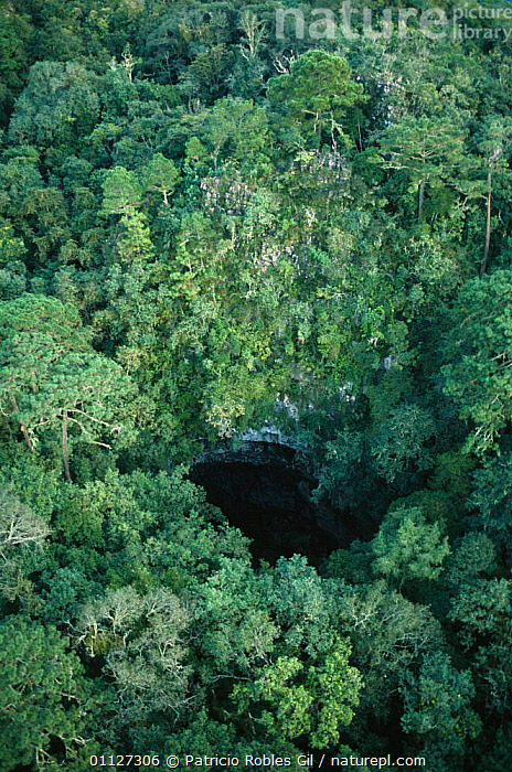 Aerial view of sink hole, El Cielo biosphere reserve, Tamaulipas, Mexico  ,  AERIALS,CANOPY,CENTRAL AMERICA,FRESHWATER,LANDSCAPES,MEXICO,PONDS,POTHOLE,RESERVE,TROPICAL,TROPICAL RAINFOREST,VERTICAL,WATER,CENTRAL-AMERICA  ,  Patricio Robles Gil