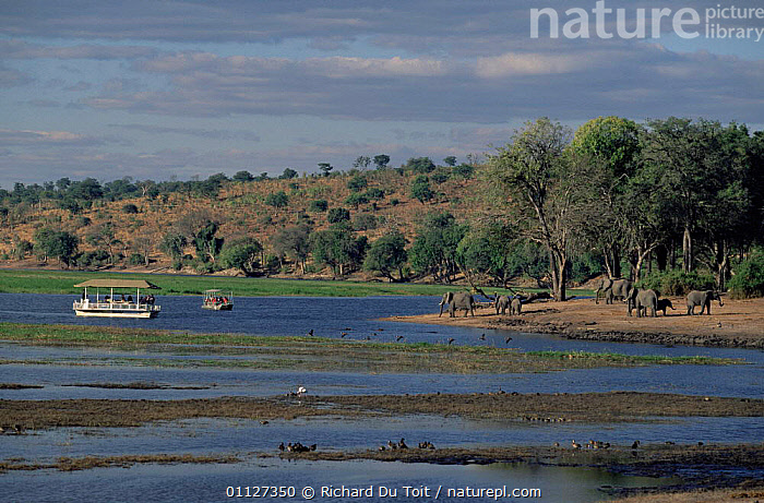 Tourists watching African elephants from boat on Chobe river, Botswana  ,  GROUPS,LOXODONTA,LANDSCAPES,PEOPLE,BOATS,AFRICANA,DRINKING,RESERVE,RIVERS,SAFARI,SOUTHERN AFRICA,TOURISM,VIEWING,WILDLIFE  ,  Richard Du Toit