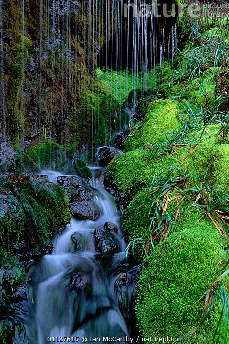 Moss growing around waterfall, Marion Island, Prince Edward Is, sub-Antarctic, WATER,WATERFALLS,LANDSCAPES,SUB ANTARCTICA,PLANTS,VERTICAL,MOSSES, Ian McCarthy