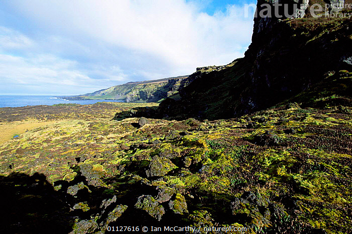 Moss growing on solidified lava on coast, Marion Island, Prince Edward Is sub-antarctica, PLANTS,COASTS,ROCK FORMATIONS,VOLCANIC,SUB ANTARCTICA,MOSSES,LANDSCAPES,Geology, Ian McCarthy