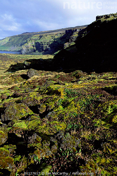 Moss growing on solidified lava on coast, Marion Island, Prince Edward Is sub-antarctica, MOSSES,VERTICAL,VOLCANIC,PLANTS,COASTS,ROCK FORMATIONS,SUB ANTARCTICA,LANDSCAPES,Geology, Ian McCarthy