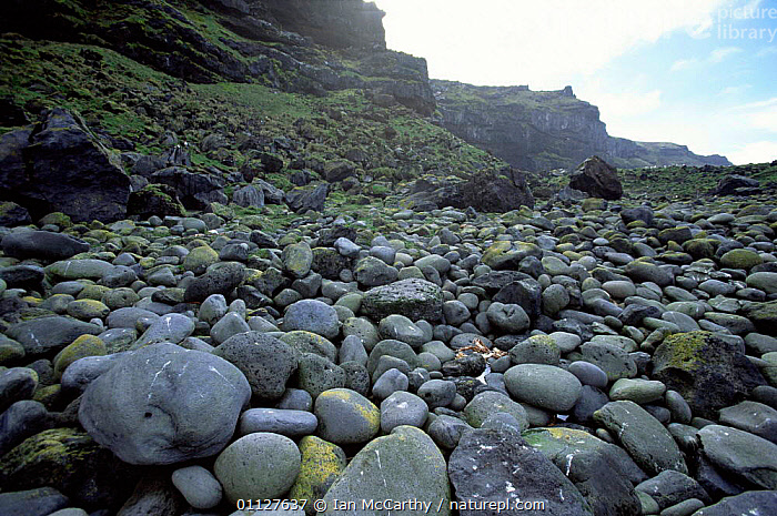 Boulders on beach, Marion Is, Prince Edward Island, sub-antarctica., COASTS,COAST,PEPPLES,LANDSCAPES,SUB ANTARCTIC,ROCK FORMATIONS,Geology, Ian McCarthy