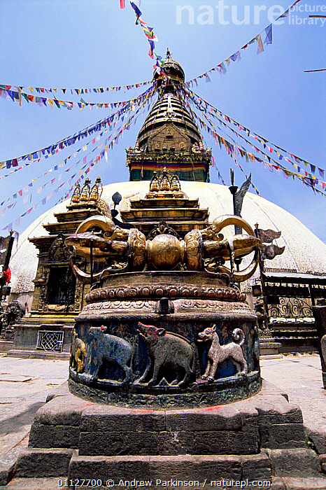 Monkey temple, Swayambhunath, Kathmandhu, Nepal, BUILDINGS,BUDDHISM,BUDDHIST,ASIA,CITIES,LANDSCAPES,FLAGS,TEMPLES,VERTICAL,RELIGION,INDIAN-SUBCONTINENT, Andrew Parkinson