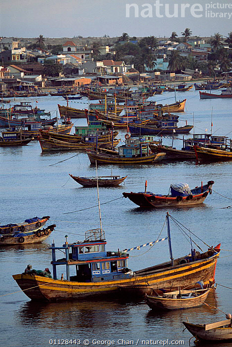 Boats in harbour, Mui ne, Southern Vietnam  ,  VERTICAL,ASIA,COASTS,FISHING,LANDSCAPES,TOWNS,SOUTH-EAST-ASIA  ,  George Chan