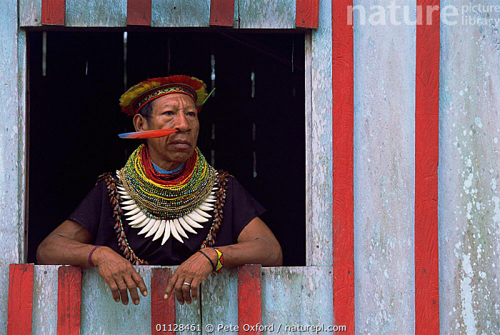 Cofan indian man looks out of house, Amazonia, Ecuador 2004 Alejandro Criollo Dureno  ,  TRIBES,RESERVE,PEOPLE,COMMUNITY,AGUA,RICO  ,  Pete Oxford