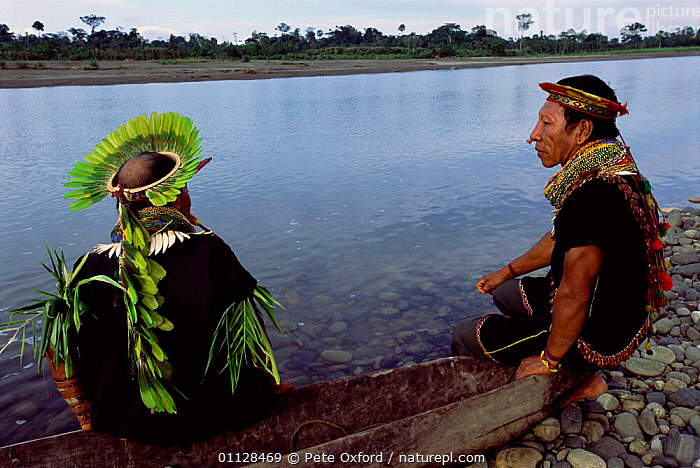 Cofan indian man with head-dress of Parrot feathers, Amazonia, Ecuador 2004 Atanacio, COMMUNITY,DURENO,CRIOLLO,AGUA,BOATS,RIVERS,HEADDRESS,MAKING,TWO,RESERVE,VERTICAL,TRIBES,PEOPLE,RICO, Pete Oxford