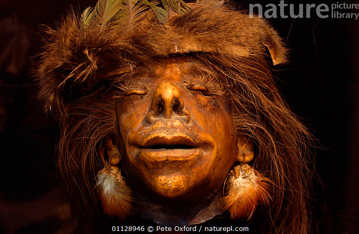 Tsantsa / shrunken head made by the Shuar Indians to their enemies, Ecuador, DONE,HEADS,LANDSCAPES,HORRIFIC,HOMO SAPIENS,PEOPLE,TRIBES, Pete Oxford