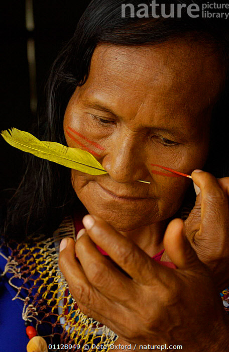 Cofan Indian with feather through nose painting face, Ecuador, Dureno community, PORTRAITS,TRADTIONAL,TRIBES,TROPICAL RAINFOREST,LANDSCAPES,FEATHERS, Pete Oxford