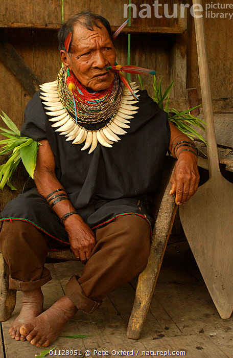 Cofan Indian, traditional dress with parrot feathers and peccary teeth. Ecuador, Dureno, TEETH,PORTRAITS,VERTICAL,TRIBES,TROPICAL RAINFOREST,LANDSCAPES,JEWELLRY,PEOPLE,COMMUNITY,COSTUME,BEADS, Pete Oxford