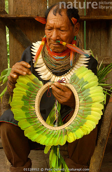 Cofan Indian, traditional dress, making crown from parrot feathers. Ecuador, Dureno  ,  BEADS,COSTUME,COMMUNITY,FEATHERS,PEOPLE,PECCARY,LANDSCAPES,TROPICAL RAINFOREST,TRIBES,VERTICAL,PORTRAITS,TEETH  ,  Pete Oxford
