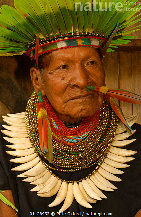 Cofan Indian, traditional dress with parrot feathers + peccary teeth. Ecuador, Dureno, TEETH,PORTRAITS,VERTICAL,TRIBES,TROPICAL RAINFOREST,LANDSCAPES,JEWELLRY,PEOPLE,COMMUNITY,COSTUME,BEADS, Pete Oxford