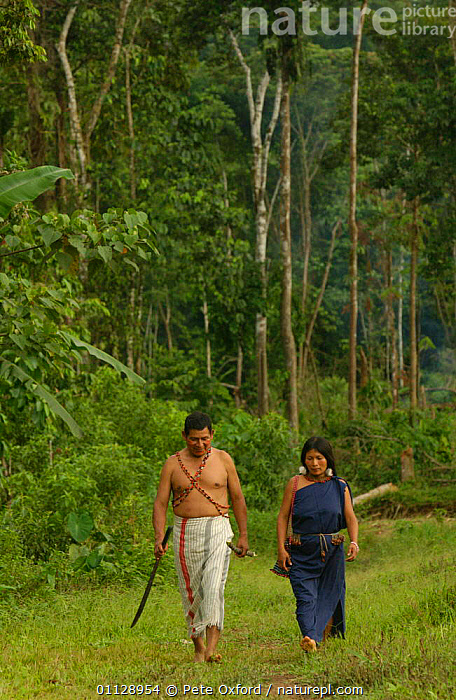 Shuar Indians wearing traditional dress walking through rainforest, Ecuador  ,  PEOPLE,LANDSCAPES,TROPICAL RAINFOREST,TRIBES,TWO,VERTICAL  ,  Pete Oxford