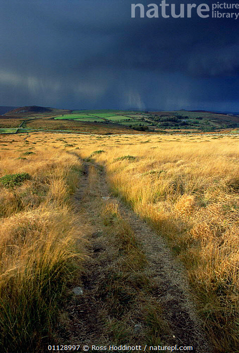 Moorland in sun with storm clouds behind, Dartmoor National Park, Devon, UK.  ,  EUROPE,LANDSCAPES,AUTUMN,RAINING,SUNLIGHT,RAIN,WEATHER,VERTICAL,STORMY,RESERVE,NP,STORMS,UK,United Kingdom,British,National Park,ENGLAND,GettyBOV  ,  Ross Hoddinott