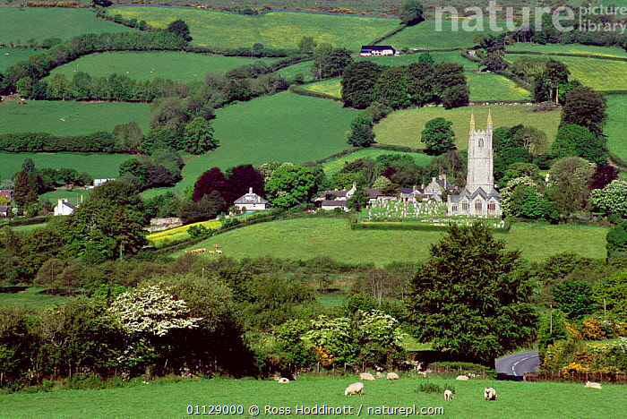 Widecombe-in-the-moor village Dartmoor National Park, Devon, UK.  ,  SHEEP,UK,SPRING,VILLAGES,EUROPE,FIELDS,COUNTRYSIDE,LANDSCAPES,HOUSES,CHURCHES,NP,HEDGEROWS,BUILDINGS,United Kingdom,British,National Park,ENGLAND,GettyBOV  ,  Ross Hoddinott
