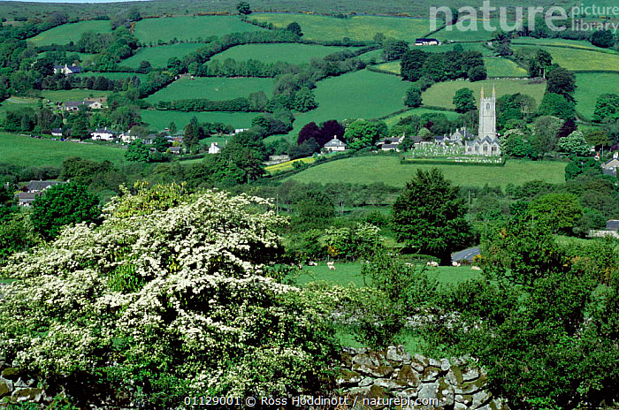 Widecombe-in-the-moor, Dartmoor National Park, Devon, UK  ,  EUROPE,CHURCH,VILLAGES,RESERVE,LANDSCAPES,NP,National Park,ENGLAND,GettyBOV,United Kingdom  ,  Ross Hoddinott