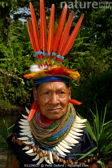 Cofan indian in traditional dress with parrot feathers and peccary teeth, Ecuador, VERTICAL,TRIBES,PORTRAITS,COSTUME,LANDSCAPES,HEADDRESS,MAN,PEOPLE, Pete Oxford