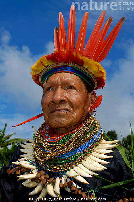 Cofan indian in traditional dress with parrot feathers and peccary teeth, Ecuador, PEOPLE,MAN,HEADDRESS,LANDSCAPES,COSTUME,PORTRAITS,TRIBES,VERTICAL, Pete Oxford