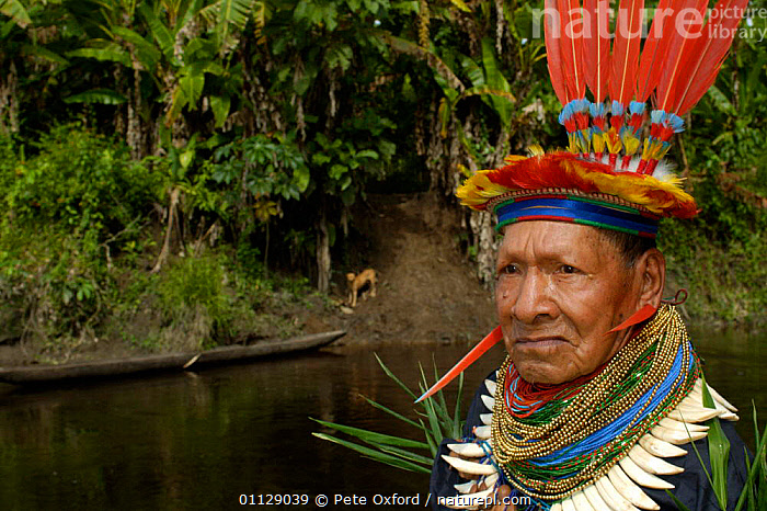 Cofan indian man in traditional dress with parrot feathers and peccary teeth,, TROPICAL RAINFOREST,TRIBES,PORTRAITS,COSTUME,LANDSCAPES,HEADDRESS,HABITAT,PEOPLE, Pete Oxford