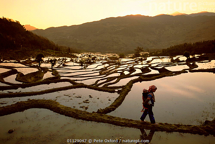 Yuanyang grand terraces, 3000 yr-old built by Hani people, Yunnan, China  ,  LANDSCAPES,TRIBES,RICE,PADDY FIELDS,WETLANDS,FLOODED,FIELDS,ASIA,CHINA  ,  Pete Oxford