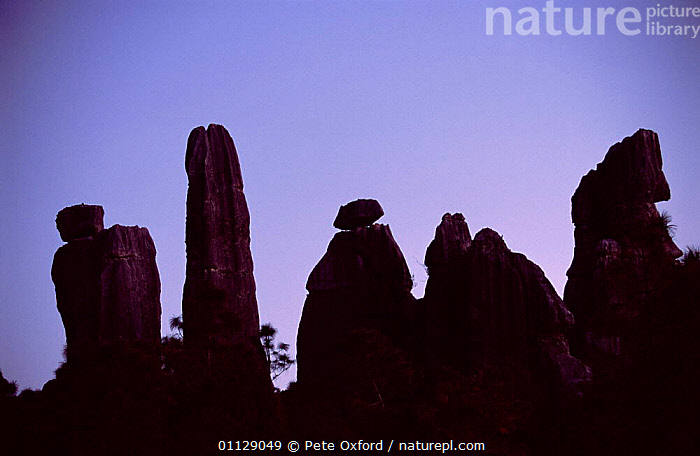 'Stone forest' of eroded limestone pinnacles, Shilin, Yunnan, China  ,  SUNRISE,LANDSCAPES,SILHOUETTES,ROCK FORMATIONS,ASIA,Geology,CHINA,Catalogue1  ,  Pete Oxford