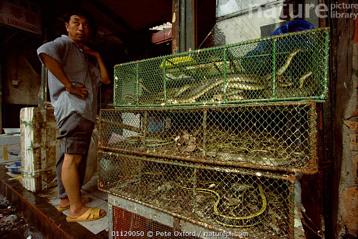 Live snakes for food and medicine, Xian market, Shannxi, China, PEOPLE,REPTILES,TRADE,WILDLIFE TRADE,Asia, Pete Oxford