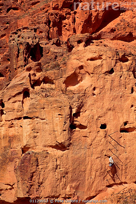 Poachers ladder used to raid Macaw and Parrot nests on cliff, Caatinga habitat, Brazil, VERTICAL,LANDSCAPES,POACHING,PEOPLE,ILLEGAL,EGGS,CLIFFS,BIRDS,Geology,SOUTH-AMERICA, Pete Oxford