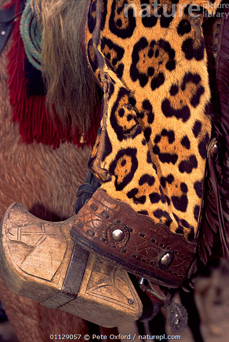 Chaps made from Jaguar skin, worn by Chagras / cowboys, Andes, Ecuador  ,  VERTICAL,PELT,RIDING,SKINS,MAMMALS,CLOTHES,CAT,CATS,CARNIVORES,BIG CATS  ,  Pete Oxford