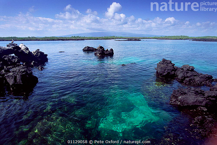 Eroded lava in sea, Isabela Is, Galapagos  ,  COASTS,VOLCANOES,LANDSCAPES,Geology,SOUTH-AMERICA  ,  Pete Oxford