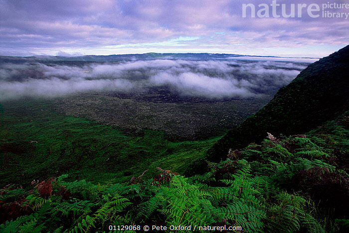 View from rim of cone of active volcano, Sierra Negra, Isabela Is, Galapagos  ,  VOLCANOES,LANDSCAPES,Geology,SOUTH-AMERICA  ,  Pete Oxford