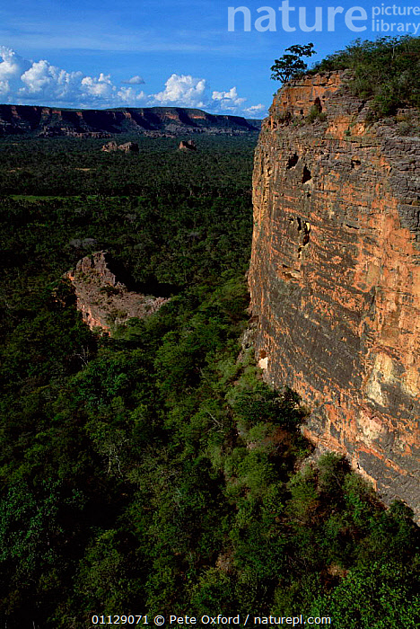 Macaw and Parrot nest site on cliff, Caatinga habitat, Brazil  ,  NESTS,CLIFFS,BIRDS,PARROTS,VERTICAL,MACAWS,LANDSCAPES,Geology,SOUTH-AMERICA  ,  Pete Oxford