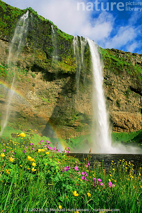 Wildflowers and Seljalandsfoss waterfall, Iceland  ,  FLOWERS,LANDSCAPES,VERTICAL,WATERFALLS,Europe  ,  Michael Hutchinson