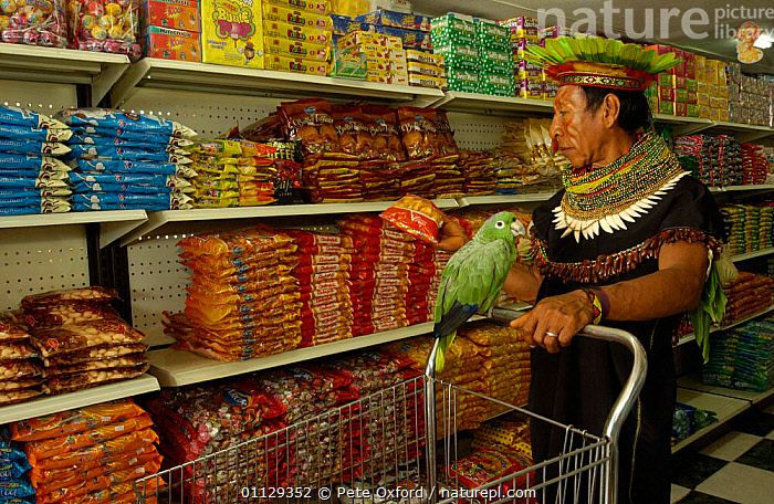 Cofan indian man with pet parrot shopping in Dureno community supermarket, Lago Agrio, Ecuador  ,  LANDSCAPES,MODERN,PETS,PEOPLE,AGRIO,COSTUME,BIRDS,SHOPS,TRADITIONAL,TRADE,TROPICAL RAINFOREST,TRIBES  ,  Pete Oxford