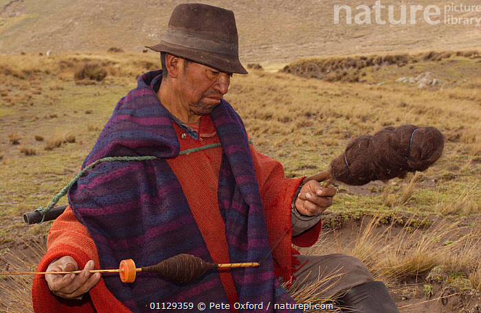 Quichua indian shepherd spinning, Paramo, Andes, Ecuador, WOOL,WORKING,TRIBES,TRADITIONAL,QUECHUA,CRAFTS,PEOPLE,MAN,MAMMALS,LANDSCAPES, Pete Oxford