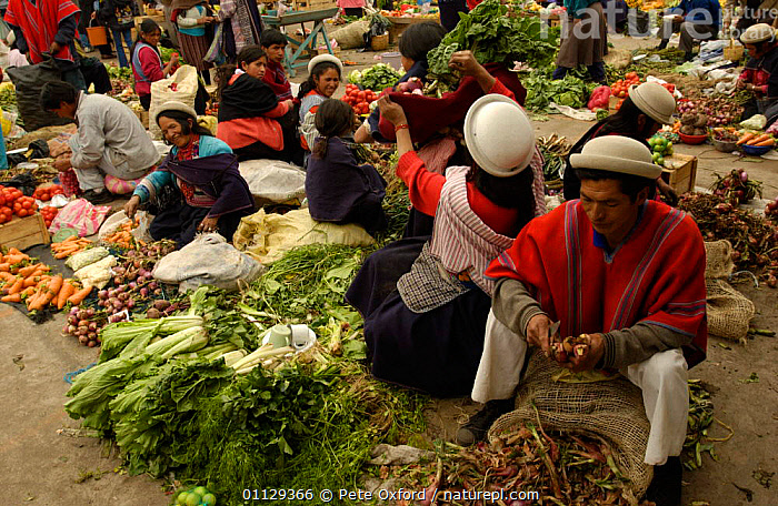 Quichua Indians selling produce at Ambato market, Andes, Ecuador  ,  GROUPS,LANDSCAPES,PEOPLE,CROPS,TRADE,QUECHUA,VEGETABLES,TRIBES  ,  Pete Oxford