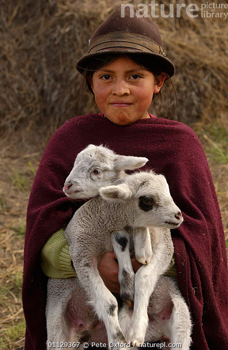 Quichua Indian child with lambs, Casa Condor, Andes, Ecuador  ,  TRIBES,VERTICAL,QUECHUA,PORTRAITS,TRADE,SHEEP,CHILDREN,BABIES,CUTE,PEOPLE,MARKET,LANDSCAPES,LIVESTOCK  ,  Pete Oxford
