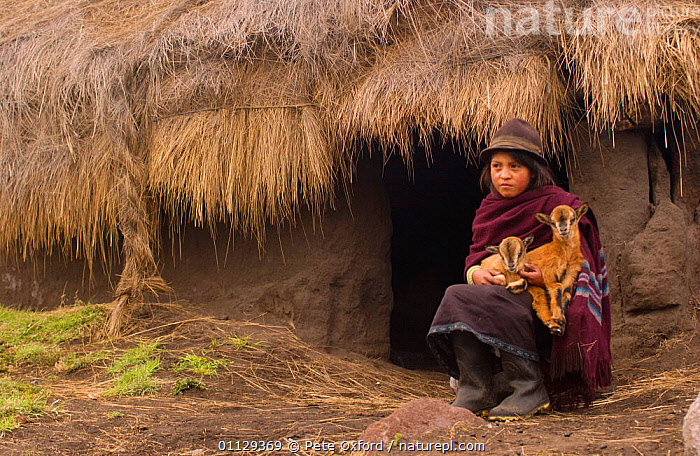 Quichua indian woman with goats, Casa Condor, Chimborazo, Andes, Ecuador, TRIBES,TRADITIONAL,QUECHUA,ARTIODACTYLA,MAMMALS,LANDSCAPES,LIVESTOCK,PEOPLE, Pete Oxford