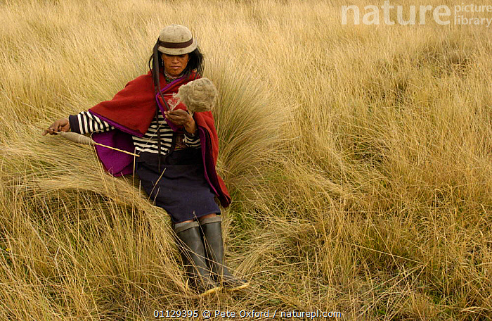 Quichua Indian spinning wool while watching over sheep, Paramo, Andes 2004  ,  QUECHUA,TRADITIONAL,TRIBES,WORKING,CRAFTS,LANDSCAPES,PEOPLE  ,  Pete Oxford