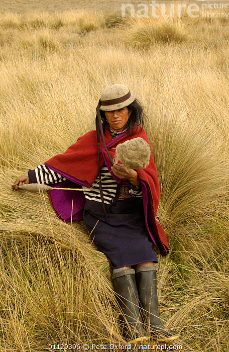 Quichua Indian spinning wool while watching over sheep, Paramo, Andes, 2004  ,  PEOPLE,LANDSCAPES,CRAFTS,WORKING,TRIBES,VERTICAL,TRADITIONAL,QUECHUA  ,  Pete Oxford