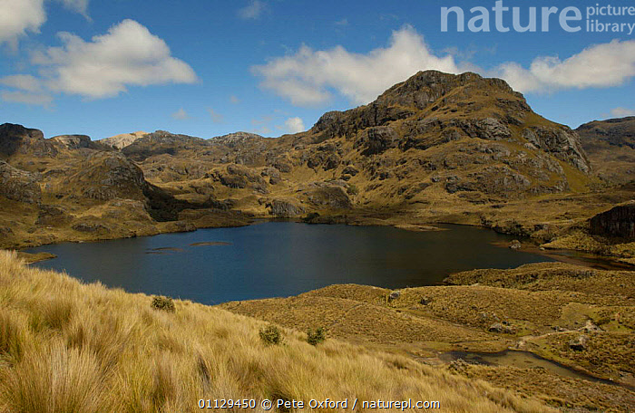 Paramo habitat, Cajas National Park, Andes, Ecuador, RESERVE,NP,LAKES,HIGHLANDS,LANDSCAPES,National Park, Pete Oxford