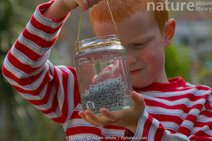 Boy with jar of frogspawn, pond dipping, UK.  ,  AMPHIBIANS,CHILD,EGGS,EUROPE,POND DIPPING,PONDS,CHILDREN,FROG,PEOPLE,ENGLAND,FRESHWATER,SPAWN  ,  Adam White