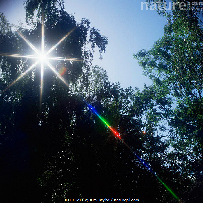 Sunlight shining through trees, split into red green + blue by filter on camera lens.  ,  LENS,LIGHT,OPTICS,OPTICAL,REFRACTION,SKIES,PHOTOGRAPHY,COLOUR,COLOUR,SPECTRUM  ,  Kim Taylor