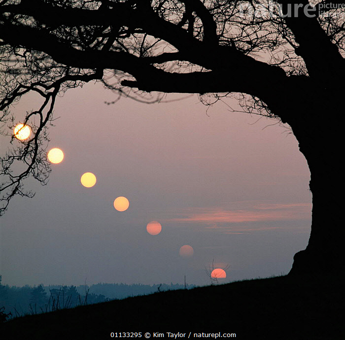 Timelapse of setting sun (at 6 minute intervals) at vernal equinox. UK  ,  SILHOUETTES,SKIES,SEQUENCE,INTERVALS,METEOROLOGY,LANDSCAPES,SEQUENCE  ,  Kim Taylor