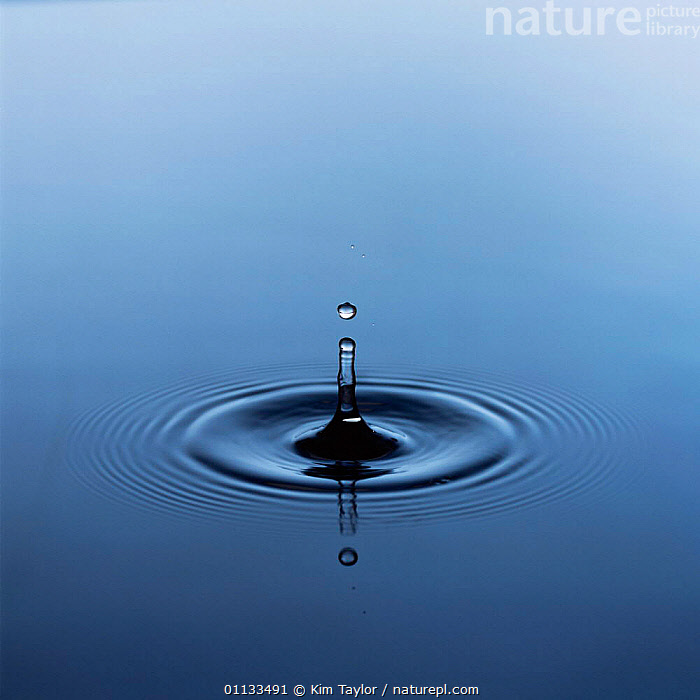 Water droplet splashing onto pond surface and making concentric rings / ripples  ,  DROPS,DROP,SLOW MOTION,PEACEFUL,Concepts  ,  Kim Taylor