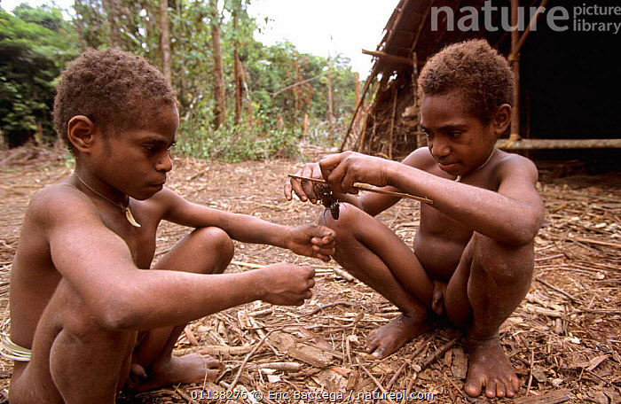 Korowai children playing with a spider, Western Papuasia, Indonesia. 1999 / 2000. (West Papua).  ,  PEOPLE,PLAY,TRIBES,TRADITIONAL,JUVENILE,LANDSCAPES,INFANTS,INSECTS,INDONESIA,ARACHNIDS,CULTURES,Asia,Communication,Invertebrates  ,  Eric Baccega