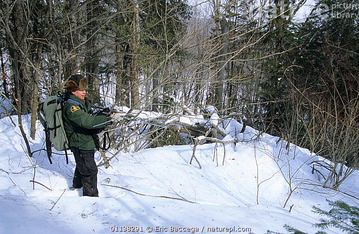 Ranger Denis Masse uses radio tracking device to find Black bears, Parc National de la Mauricie, Canada.  ,  CANADA,FIELDWORK,MAURICIE,SNOW,RESEARCH,QUEBEC,PEOPLE,NP,USING,WINTER,North America,National Park  ,  Eric Baccega