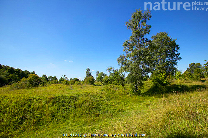 Barnack Hills and Hollows nature reserve, old quarry re-colonised, Cambridgeshire, UK.  ,  COLONISATION,EUROPE,GRASSLAND,LANDSCAPES,QUARRIES,RESERVE,SUCCESSION,UK,United Kingdom,British,ENGLAND  ,  Jason Smalley